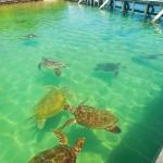 Sorprendente vida marina en el acuario de Graham's Place.