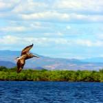 Isla de Los Pájaros, uno de los atractivos de San Lorenzo.