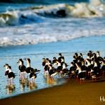 La fauna en las playas de Choluteca encanta a los visitantes.