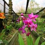 El Jardín Torogón se dedica a proteger la vida silvestre de la montaña Mico Quemado.