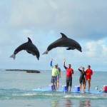 En Roatán podrá apreciar un espectáculo de delfines.