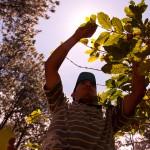 En el Parque San Juan, lugar abierto al público y apto para un bonito paseo, la ESNACIFOR dirige investigaciones científicas forestales sobre el cultivo de café bajo sombra de pino.