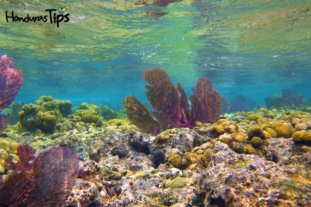 Belleza escénica de los arrecifes en Utila.