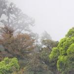 La lluvia y el frío siempre están presentes en la Reserva Biológica El Güisayote.