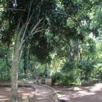 Refrésquese y disfrute del jardín botánico de Casa Galeano / Cool off and enjoy the botanical garden at Casa Galeano.