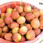 En Lancetilla también podrá encontrar la Litchi chinensis, mejor conocida como la licha. Esta se produce entre mayo a junio, contrario al rambután de octubre a enero.