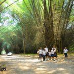 El túnel de bambú se compone de Bambusa arundinaceae, una especie que es útil para la construcción. En todo el jardín existen 17 especies de bambú.