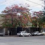 Mercado Guamilito de San Pedro Sula_Honduras