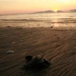 Voluntariado tortuga golfina en Choluteca