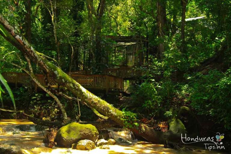 La reserva se encuentra escondida entre los árboles.