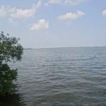 Paseo por la Laguna de Alvarado