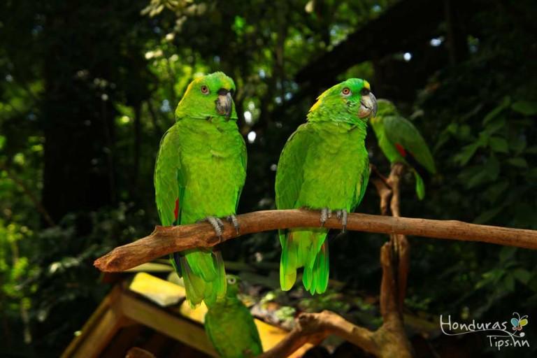 Dentro del parque lo esperan mas de 180 tipos de aves hondureñas.