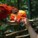 Parque de Aves y Reserva Natural Montaña Guacamaya