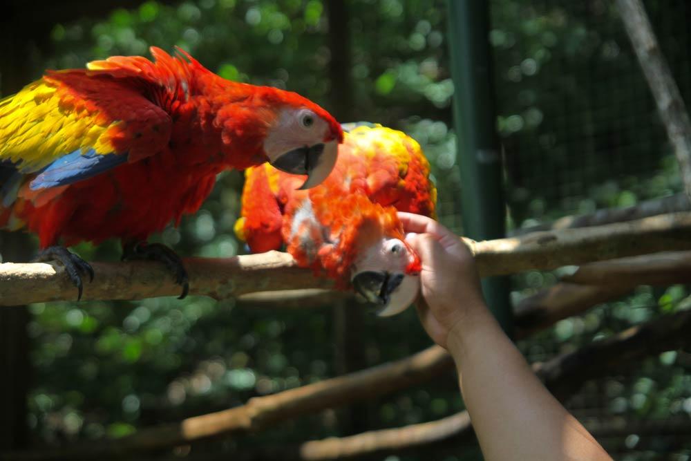 Parque De Aves Y Reserva Natural Monta U00f1a Guacamaya