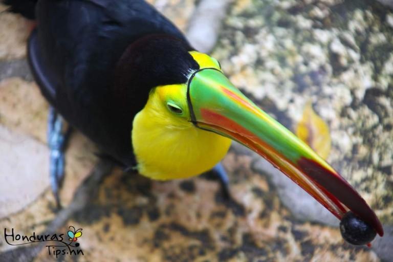Los colores de estos bellos animales emplumados es digno de admirar.
