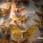 Dentro del centro de visitantes usted podrá encontrar una interesante exhibición sobre la variedad de especies de insectos y mariposas / Inside the visitor center you will find an interesting exhibition that contains a variety of insect and butterfly species.