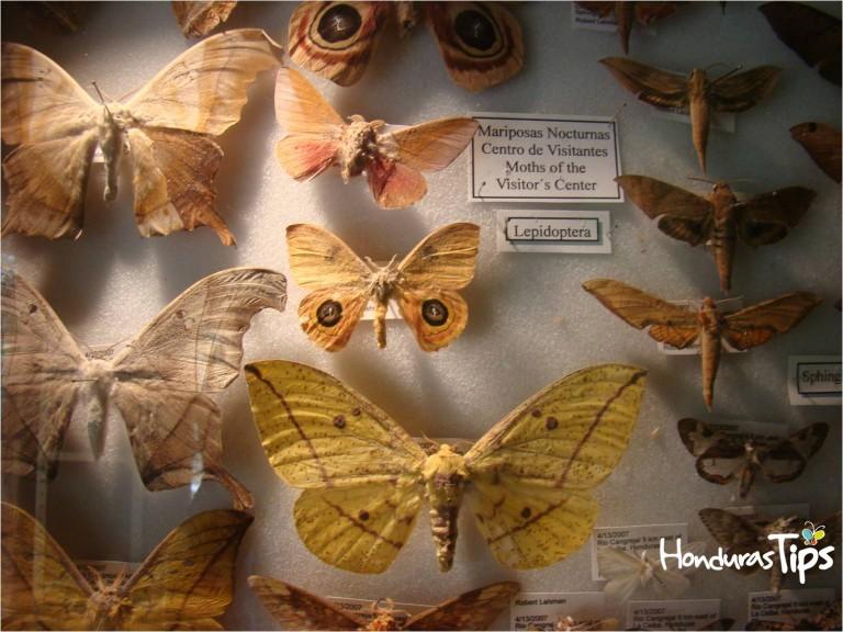 Dentro del centro de visitantes usted podrá encontrar una interesante exhibición sobre la variedad de especies de insectos y mariposas.