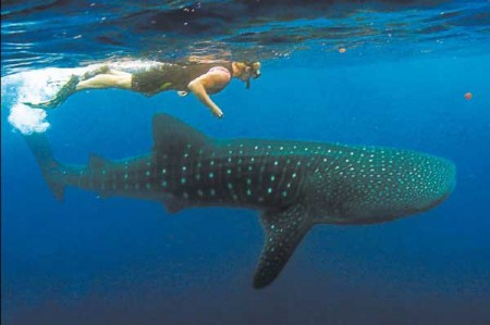 Utila, entre  los 10 destinos para el buceo en el mundo.