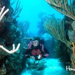Arrecife Mesoamericano en Roatán