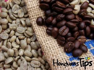 Otra alternativa para el sector es la producción de café especial o de estricta altura.