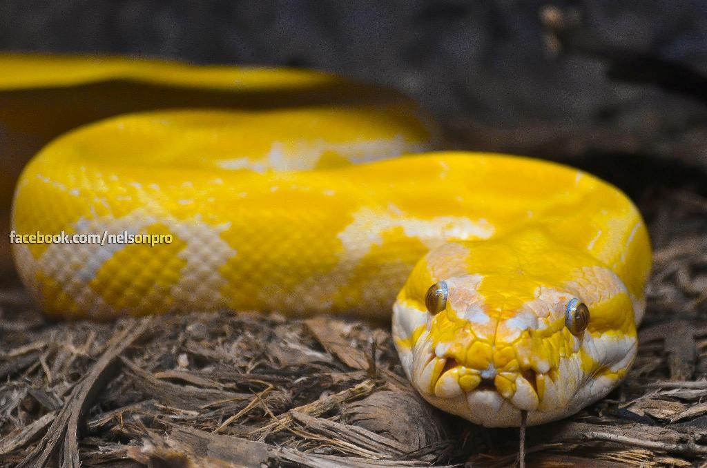 La cabeza de la serpiente se encuentra en uno de los puntos de interés, ¿lo nota?