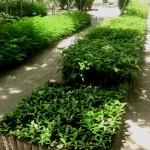 En La Tigra se apasionan por el mantenimiento de la verde foresta que caracteriza el parque.
