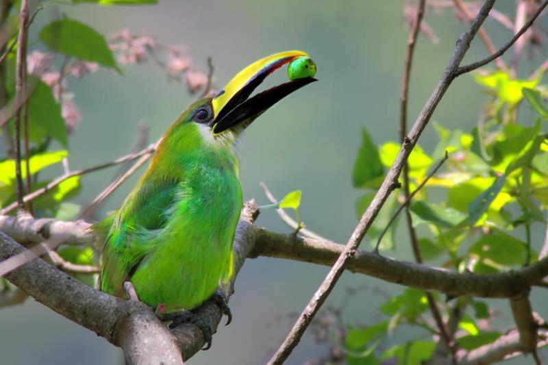 En cuanto a fauna, en La Tigra existen diferentes especies de mamíferos, anfibios, reptiles y aves.