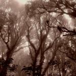 El Parque Nacional La Tigra está conformado por un bosque nublado, sorpréndase de su belleza y ambiente.