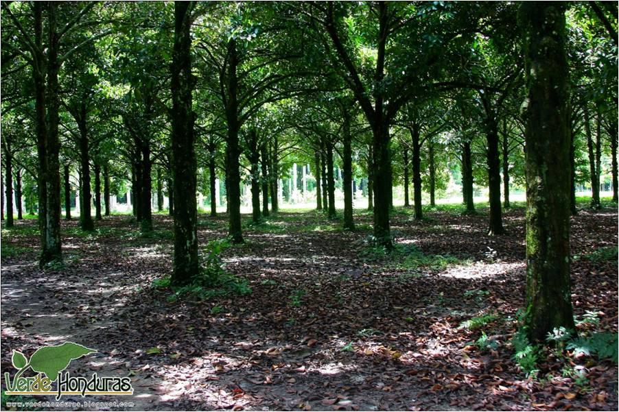 El elemento de la repeticion se da en los árboles, así como de líneas que atraen la vista. Hay sombras y se logra colar el sol para dar claridad en algunas partes del suelo.