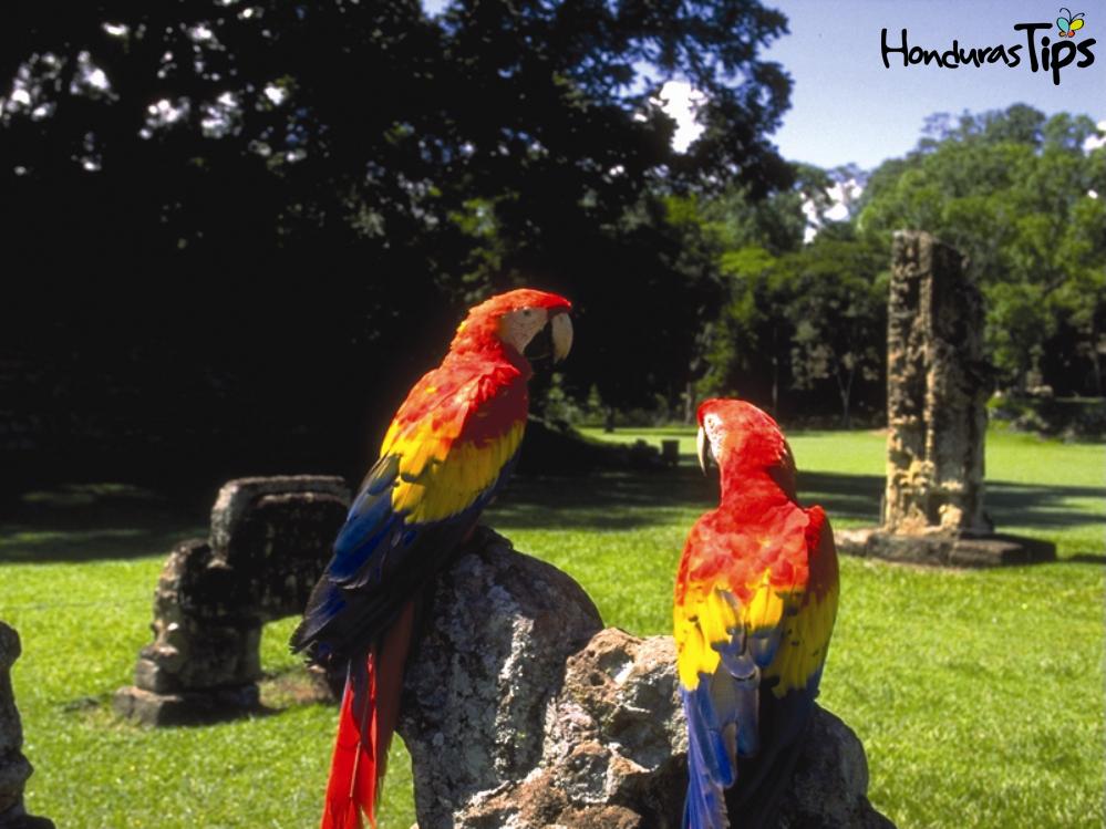 El programa del Yorktown incluye una extensión opcional previa al viaje, que incluye tres días recorriendo Copán, visitando atracciones como Rastrojón, el Parque Arqueológico Copán Ruinas y Macaw Mountain.