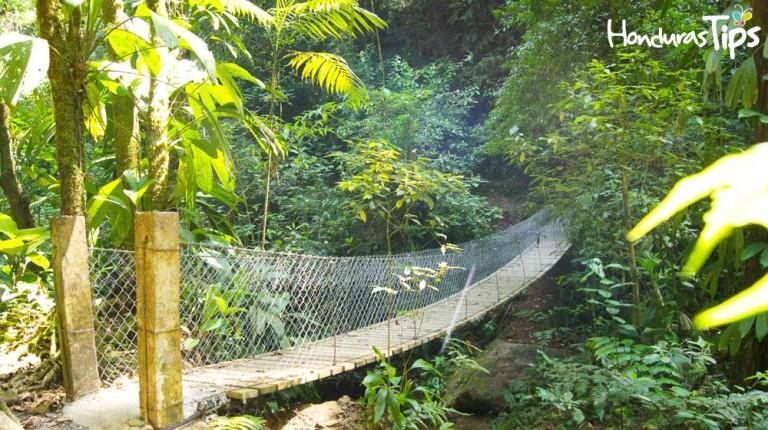 Entre la vegetación siempre húmeda es posible ver venados, mapaches y guatusas que conviven con más de 200 especies de aves entre la rica flora.
