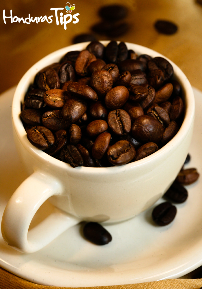 Dentro del Coffee Fest, se llevará a cabo la Segunda Competencia Regional de Café Tostado.