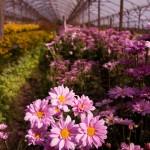 Paseo Entre Flores