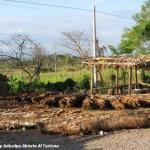 En Olancho, con el verano viene el vino de coyol