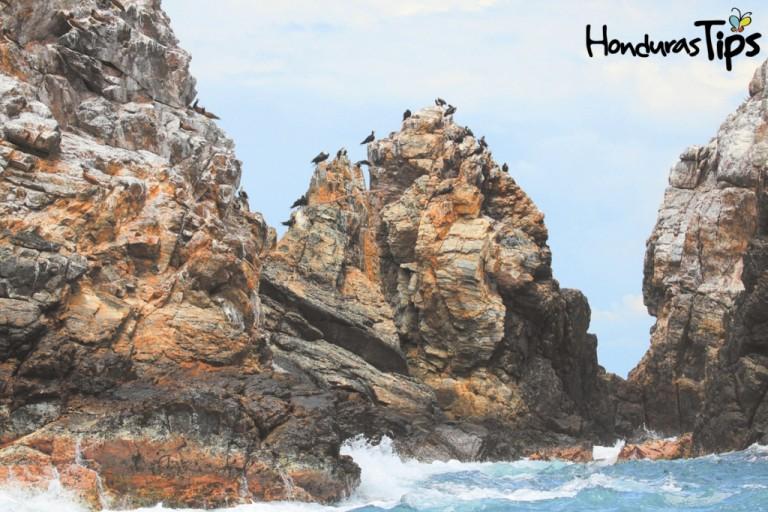 Los parques nacionales en la Bahía de Tela, como el Jeannette Kawas (en imagen) y Punta Izopo son otro gran atractivo del destino.