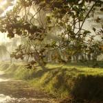 Honduras, el paraíso de la biodiversidad
