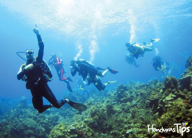 Las Islas de la Bahía  se encuentran a lo largo del sistema de barrera de coral, por lo que es un lugar privilegiado para el snorkeling y buceo.
