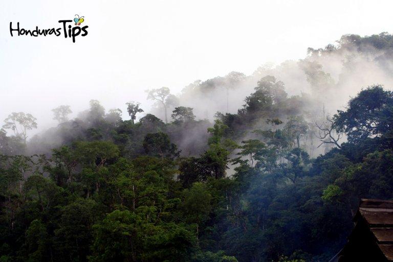 Biosfera Río Platano