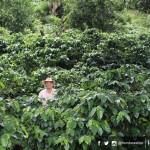 Santa Rosa de Copán celebra el Día Nacional de la Caficultura