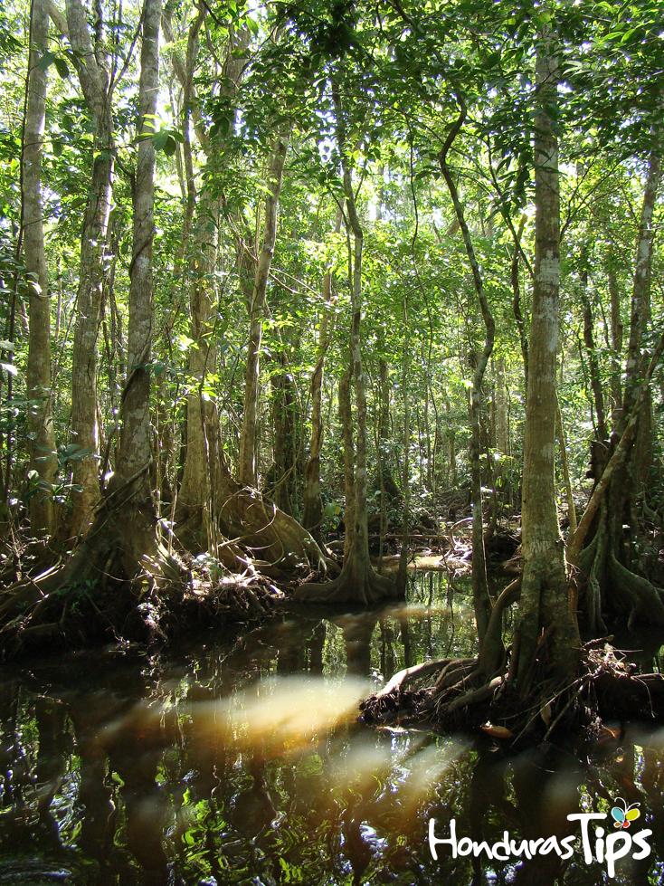 Casi la totalidad del área del parque se encuentra ubicada en un ambiente de pantano y manglar.