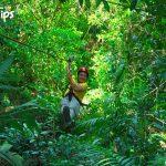 En Jungle River Canopy Tour, tendrá la oportunidad también de apreciar el encanto del bosque primario.