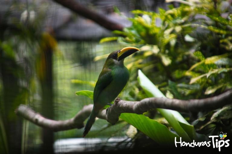 La mayoría de las aves no son mantenidas en jaulas durante el día. Se les permite que vuelen libremente o se mantienen en espacios abiertos y naturales.