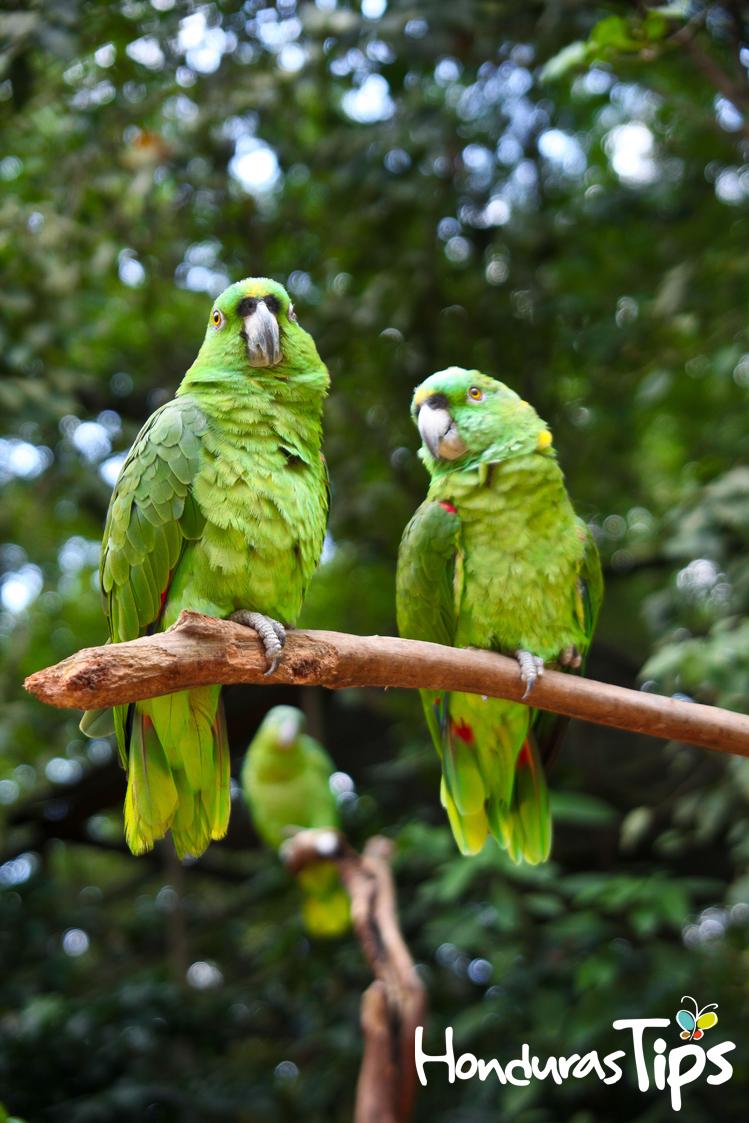 Copán es famoso por más que sus tesoros del pasado. También es uno de los pocos lugares en Centro América que posee un parque de joyas vivientes.