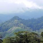 Río Tinto, último pulmón verde en Honduras para apasionados de las aves
