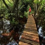 Los senderos cómodos y seguros en las áreas protegidas permiten a los viajeros un verdadero encuentro con la naturaleza.
