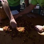 Día 2 de Barista & Farmer en Finca Santa Isabel en Copán