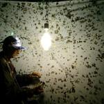 Bob Lehman lleva más de cincuenta años estudiando las mariposas de Honduras. Su trabajo es invaluable.