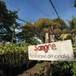 Viveros de árboles de mangle listos para reforestar la humedad en el Refugio de Vida Silvestre de Cuero y Salado.