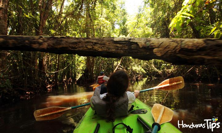 El kayaking es una de las actividades disponibles en Punta Izopo en Tela.