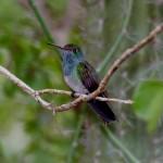La observación de aves en Honduyate es una actividad imperdible durante sus vacaciones en el Lago de Yojoa.